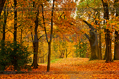 Herbstliche Allee | Foto mit hoher Auflösung |ID 3015750