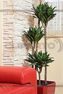 Rotes Ledersofa und grüne Pflanze | Foto mit hoher Auflösung |ID 3016756