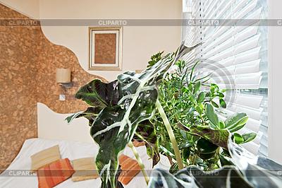 Sonniges Schlafzimmer mit grünem Pflanzeblatt | Foto mit hoher Auflösung |ID 3016919