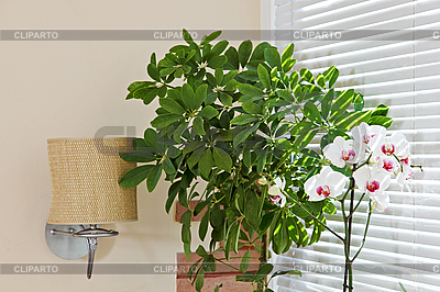 Орхидея и зеленое растение перед жалюзями | Фото большого размера |ID 3016924