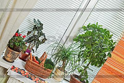 Picknickkorb und Blumentöpfe auf der Fensterbank | Foto mit hoher Auflösung |ID 3016942