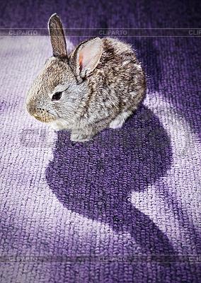 Kaninchen auf dem Teppich | Foto mit hoher Auflösung |ID 3016978