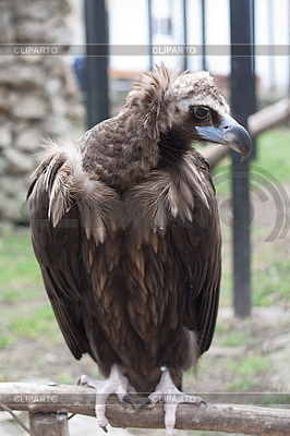 Adler im Zoo | Foto mit hoher Auflösung |ID 3017672