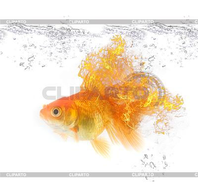 золотая рыбка клипарт: