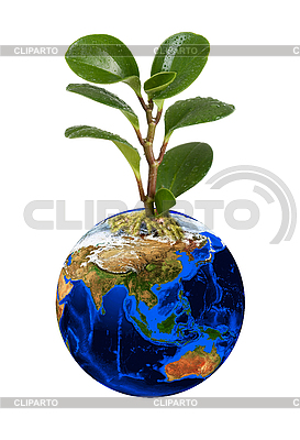 Планета Земля с зеленым ростком | Фото большого размера |ID 3021461