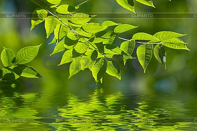 Зеленые листья в воде | Фото большого размера |ID 3027514