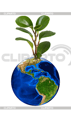 Планета Земля с зеленым ростком | Фото большого размера |ID 3027715