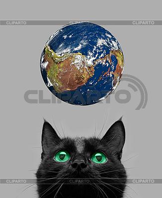 Kot bawi się z kuli ziemskiej | Foto stockowe wysokiej rozdzielczości |ID 3029728
