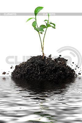 Junge Pflanze | Foto mit hoher Auflösung |ID 3029775