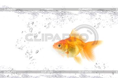 Goldfische | Foto mit hoher Auflösung |ID 3030363