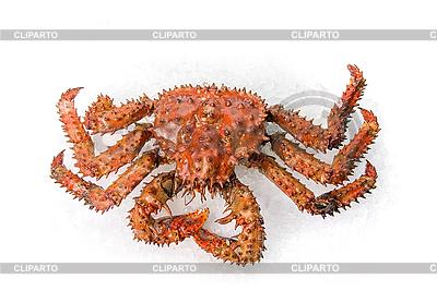 The King crab  | Foto stockowe wysokiej rozdzielczości |ID 3030739
