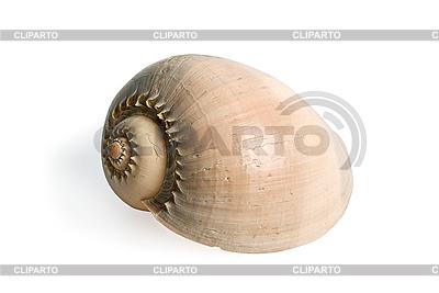 Морская ракушка | Фото большого размера |ID 3030755