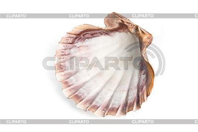 Морская ракушка | Фото большого размера |ID 3030767