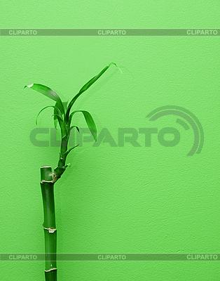 竹类植物 | 高分辨率照片 |ID 3031259