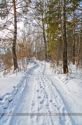 Дорога в зимнем лесу | Фото большого размера |ID 3036345