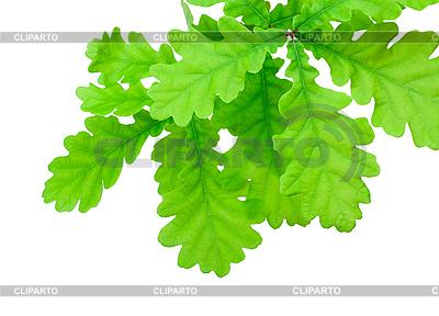 Liście Dębu | Foto stockowe wysokiej rozdzielczości |ID 3017399