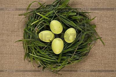 Gras-Nest mit Eiern   Foto mit hoher Auflösung  ID 3020501