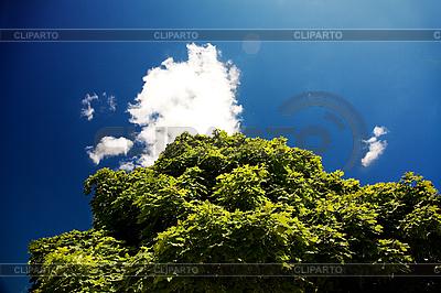 Niebieskie niebo i zielone liście | Foto stockowe wysokiej rozdzielczości |ID 3023176