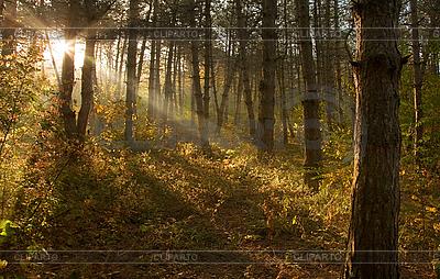 Sonnenaufgang im Wald | Foto mit hoher Auflösung |ID 3023446