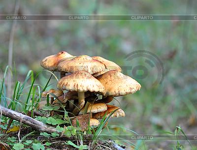 Pilze | Foto mit hoher Auflösung |ID 3026123