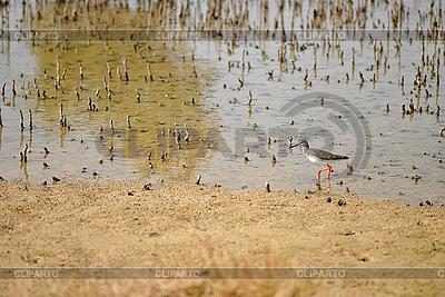 Vogel neben den Wurzeln der Mangroven | Foto mit hoher Auflösung |ID 3038781