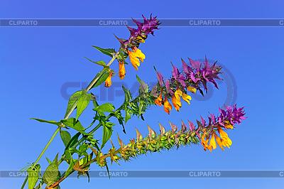 Красивые полевые цветы с зелеными и