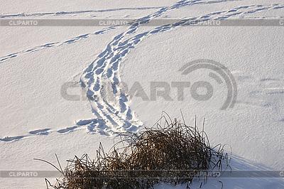 Spuren auf dem Eis mit Schnee bedeckt | Foto mit hoher Auflösung |ID 3063069