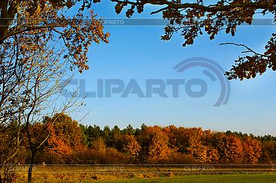 Las w kolorach jesieni | Foto stockowe wysokiej rozdzielczości |ID 3066703