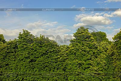 Thick Kastanien Kronen | Foto mit hoher Auflösung |ID 3066818