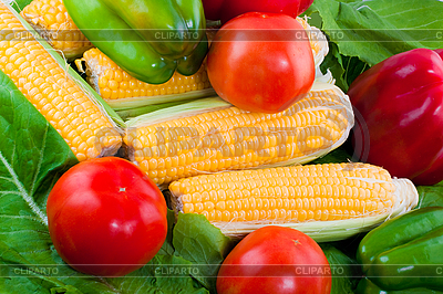 Dojrzałe warzywa | Foto stockowe wysokiej rozdzielczości |ID 3039356