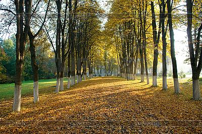 Słoneczny jesienny wieczór | Foto stockowe wysokiej rozdzielczości |ID 3039694