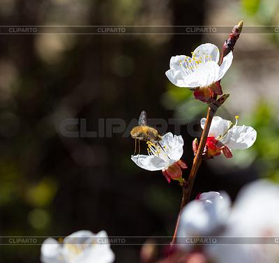 Insekt sammelt den Nektar | Foto mit hoher Auflösung |ID 3237114