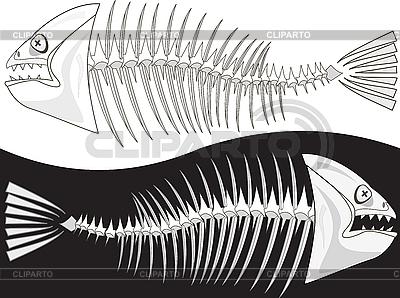 Kości szkieletu ryby | Klipart wektorowy |ID 3064012