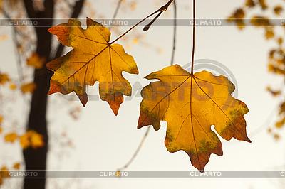 秋天的树叶 | 高分辨率照片 |ID 3080206