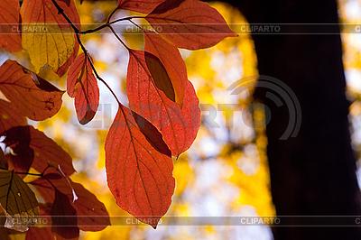 Herbst | Foto mit hoher Auflösung |ID 3080217