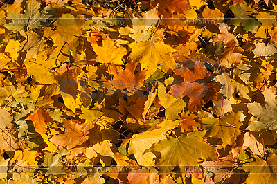 Herbstliche Blätter | Foto mit hoher Auflösung |ID 3080220