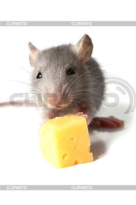 Maus und Käse | Foto mit hoher Auflösung |ID 3041157
