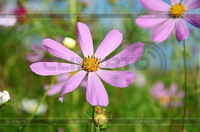 Blumen auf der Wiese | Foto mit hoher Auflösung |ID 3042392