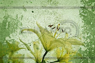 Zielonym tle kwiatów | Foto stockowe wysokiej rozdzielczości |ID 3054304