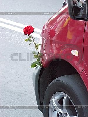 Piękna róża i samochód | Foto stockowe wysokiej rozdzielczości |ID 3042728