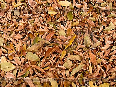 Herbstblätter | Foto mit hoher Auflösung |ID 3045397