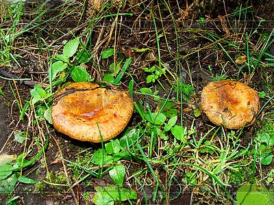 Dwa grzyby | Foto stockowe wysokiej rozdzielczości |ID 3045399
