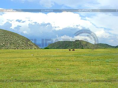 Pferde grasen auf einer Wiese vor den Bergen | Foto mit hoher Auflösung |ID 3045402