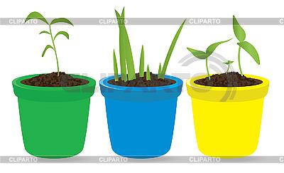 Junge Pflanzen in Töpfen | Stock Vektorgrafik |ID 3045530