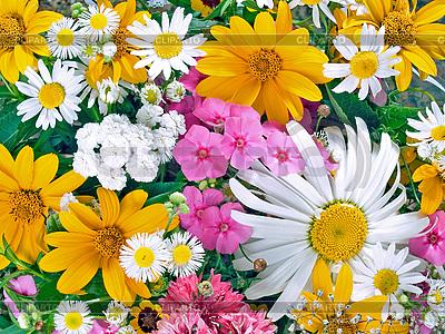 Blumen | Foto mit hoher Auflösung |ID 3049423