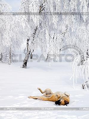 Собака играет в снегу. | Фото большого размера |ID 3117849