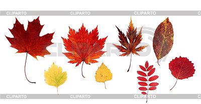 Herbstliche Blätter | Foto mit hoher Auflösung |ID 3066329