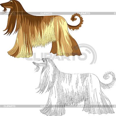 Pies rasy ogar Afghan | Klipart wektorowy |ID 3058862