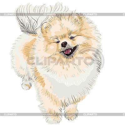 Uśmiechy Spitz-dog | Klipart wektorowy |ID 3058954