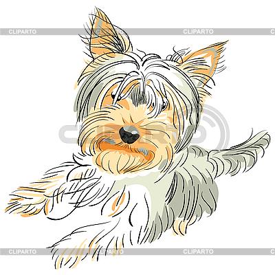 Rasa psa Yorkshire terrier | Klipart wektorowy |ID 3060085